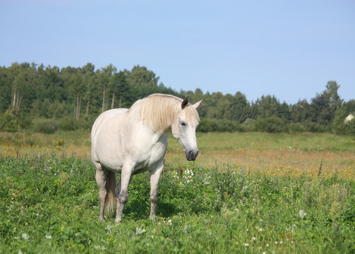 Laminitis, Spring Grass, and How Yea-Sacc Can Help – Horse