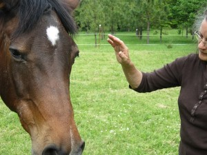 """Saying """"hello"""" to your horse"""