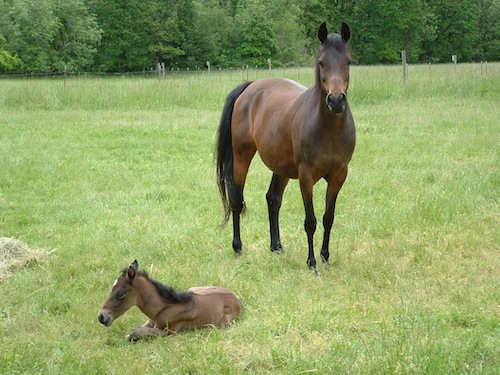 mare & foal-maggie